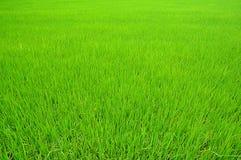 Ferme de riz Images libres de droits