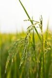 Ferme de riz Image libre de droits