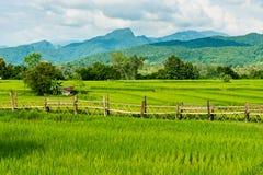 Ferme de riz avec le farmer& x27 ; hutte de s Photographie stock