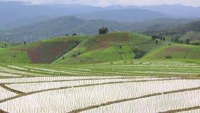 Ferme de riz sur la colline et le vieux cottage de la Thaïlande (tir tenu dans la main de casserole) Photographie stock