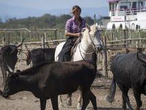 Ferme de vache dans Aigues Mortes, France Photos stock
