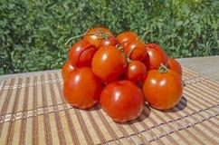 Ferme des tomates rouges savoureuses Photo libre de droits