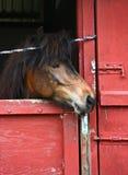 Ferme du cheval Head Photographie stock libre de droits