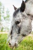 Ferme du cheval Head Photo stock