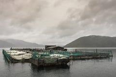 Ferme entière du Roi Salmon dans la baie de Ruakaka, Nouvelle-Zélande images stock