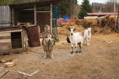 Ferme et animaux de pays images stock