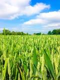 Ferme et champ de maïs Image stock