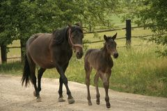 Ferme et cheval Image libre de droits