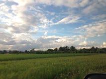Ferme et lumière de riz quand coucher du soleil Photos stock