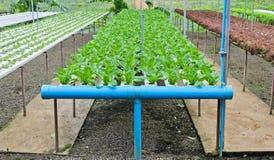 Ferme hydroponique de légumes Photographie stock libre de droits