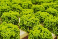 Ferme hydroponique de salade de légumes Méthode de culture hydroponique d'élevage Images libres de droits