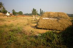Ferme indienne pauvre 5 de ménage Andhra Pradesh, Anantapur Photo libre de droits