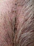 Ferme : la peau de porc velue Image libre de droits