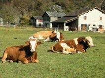 Ferme lente de nourriture d'agriculture Images libres de droits