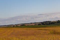 Ferme mélangée d'utilisation des sojas et du maïs mûrs prêts pour la récolte photos libres de droits