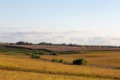 Ferme mélangée d'utilisation des sojas et du maïs mûrs prêts pour la récolte photographie stock libre de droits