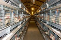 Ferme moderne de cage de poulet Photos libres de droits