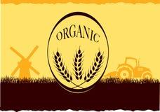 Ferme organique Photo stock