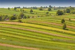 Ferme organique modelée de paysage près de parc national de Roztocze, Pologne photographie stock