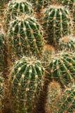 Ferme produisant une richesse d'espèce de cactus Photo libre de droits
