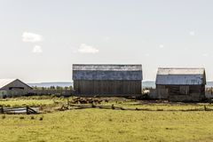 Ferme rurale d'Ontario avec l'agriculture de Canada d'animaux d'agriculture de stockage de silo de grange images libres de droits