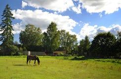 Ferme suédoise avec le cheval Arabe Image libre de droits