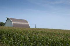 Ferme sur la zone de maïs Photographie stock
