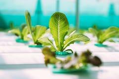 Ferme végétale verte de culture hydroponique Photographie stock libre de droits
