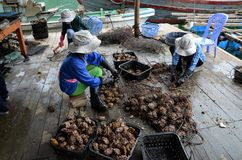 Ferme Vietnam de perle Photos stock