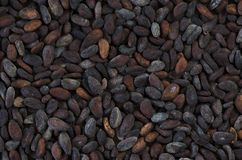 Fermented Cocoa Beans Royalty Free Stock Images
