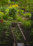 Fermentez le jardin avec des fleurs et le semis photographie stock libre de droits