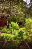 Fermentez le jardin avec des fleurs et le semis images stock
