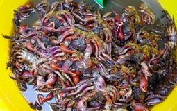Fermentujący krab z chili i czosnkiem zdjęcia royalty free