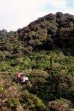 Fermer la fermeture éclair-garniture au-dessus de forêt humide Photos stock