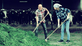 2 fermers подготавливая траву Стоковое фото RF