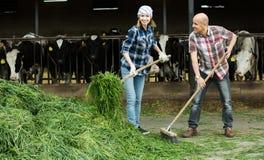 2 fermers подготавливая траву Стоковое Изображение