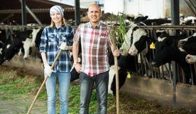 Fermers preparing grass Royalty Free Stock Photos