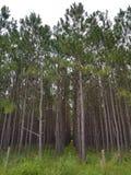 fermes d'arbre photographie stock libre de droits