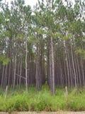 fermes d'arbre image libre de droits