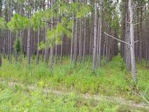 fermes d'arbre image stock