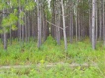 fermes d'arbre photographie stock