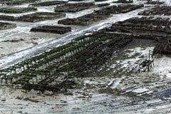 Fermes d'huître dans les Frances image libre de droits