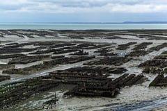 Fermes d'huître dans les Frances photo libre de droits