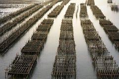Fermes d'huître en mer à la province Chanthaburi, Thaïlande image libre de droits