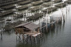 Fermes d'huître en mer à la province Chanthaburi, Thaïlande photo libre de droits