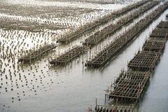 Fermes d'huître en mer à la province Chanthaburi, Thaïlande photos libres de droits