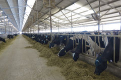 Fermes de cheptels laitiers Images libres de droits