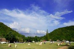 Fermes de moutons dans les montagnes Images stock