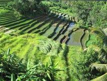 Fermes de riz image stock