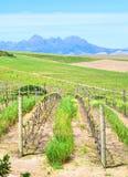 Fermes de vin et de blé photographie stock libre de droits